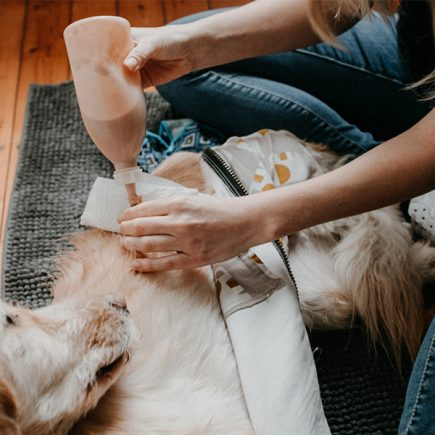 Hund mit Magensonde. PEG-tube